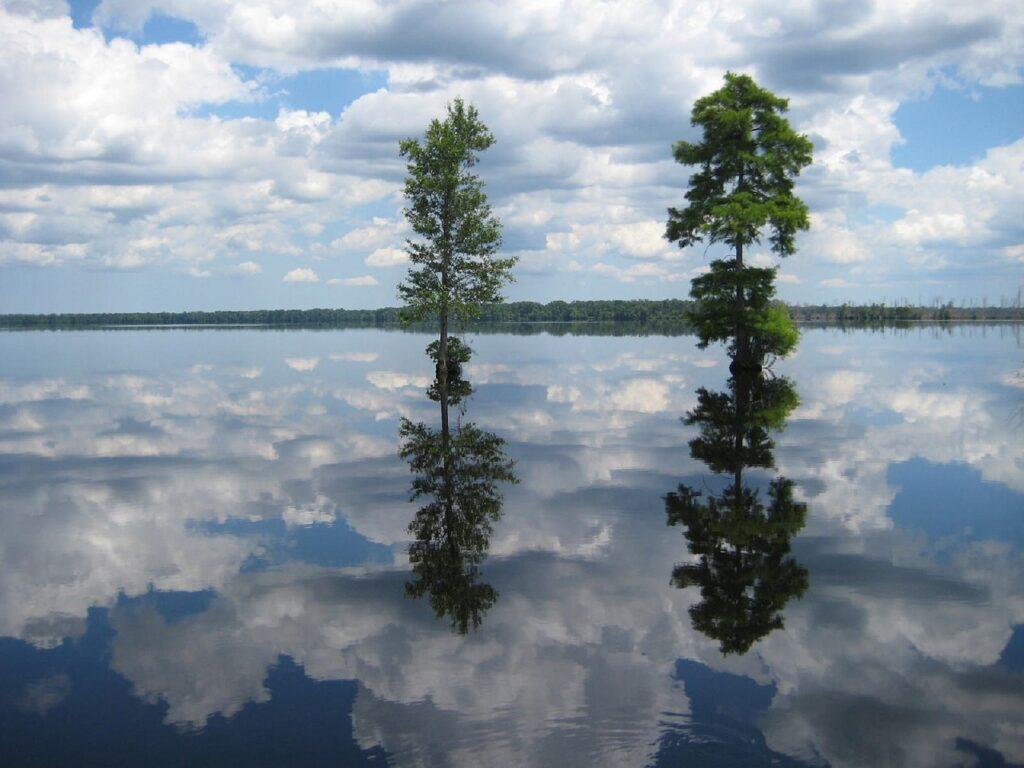 Great-Dismal-Swamp