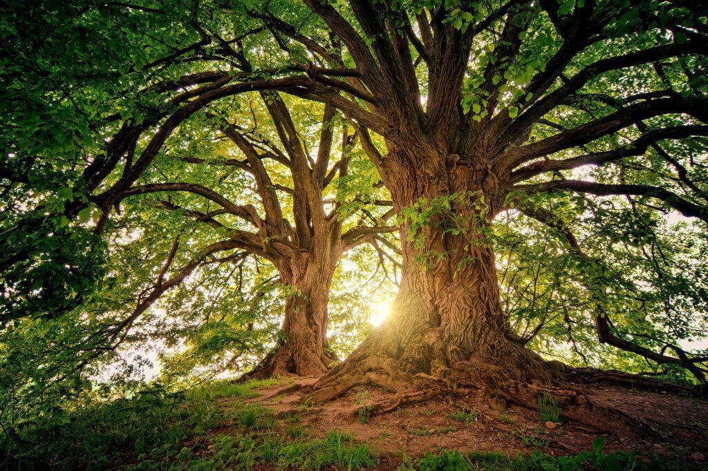 trees_sleep